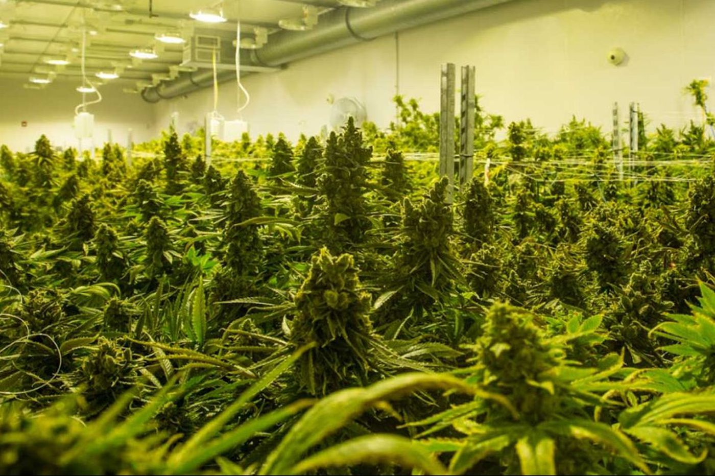 What Pa. patients are treating with their medical marijuana