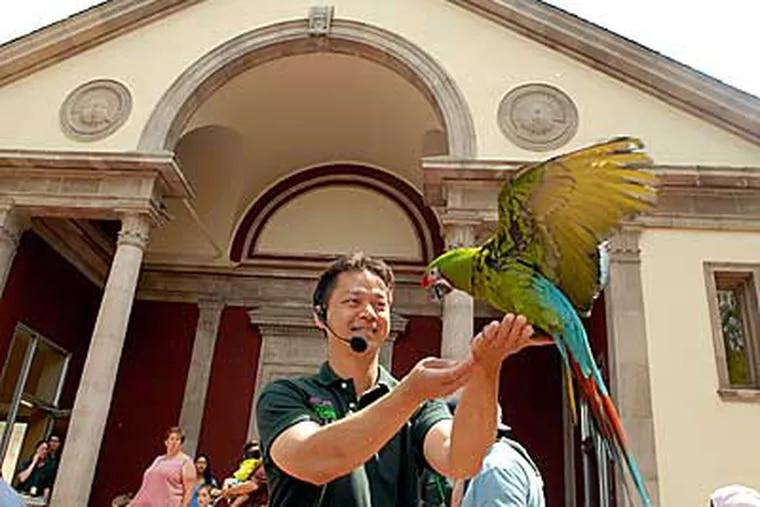 """A macaw trained by Phung Luu flies into his hand inf front of the new McNeil Avian Center at the zoo during an event called """"Festival of Flight."""" (Ron Tarver / Staff Photographer)"""