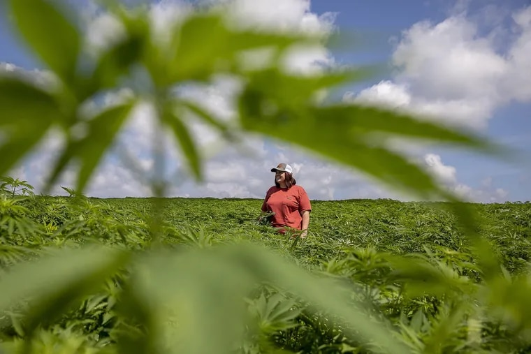 Kathleen Butler in a hemp field at Butler Farms in Bourbon County on June 21, 2019. Butler Farms has the first U.S. contract with Patagonia as an organic hemp supplier.