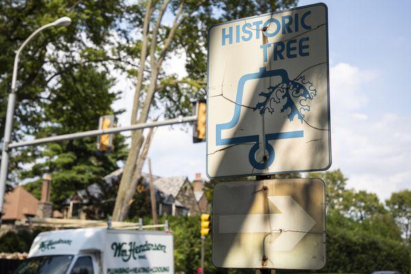 'Historic Tree' sign on City Avenue that leads nowhere stumps Philadelphians