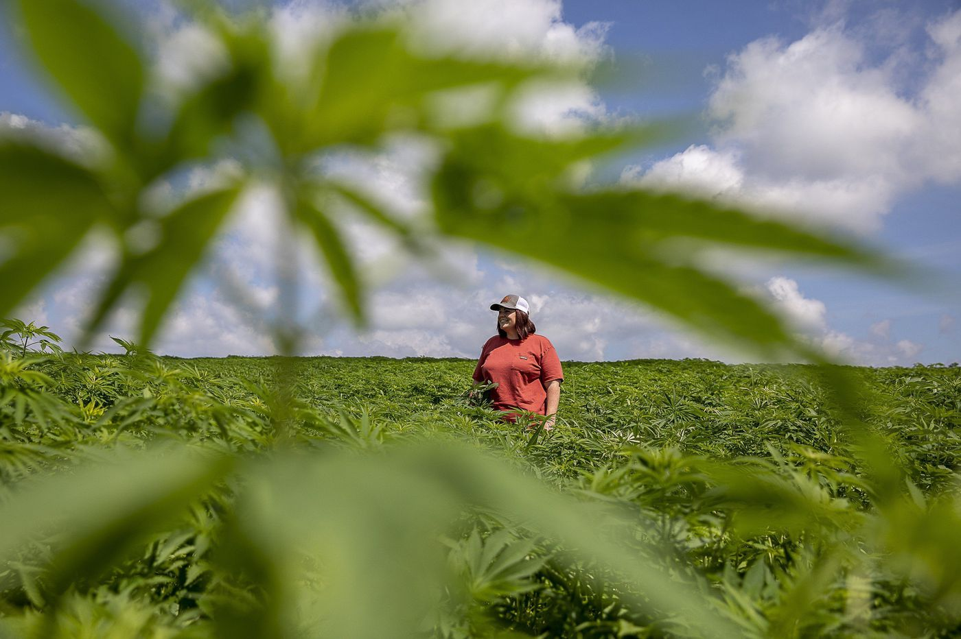 Flood of hemp harvest hitting the market could sink price