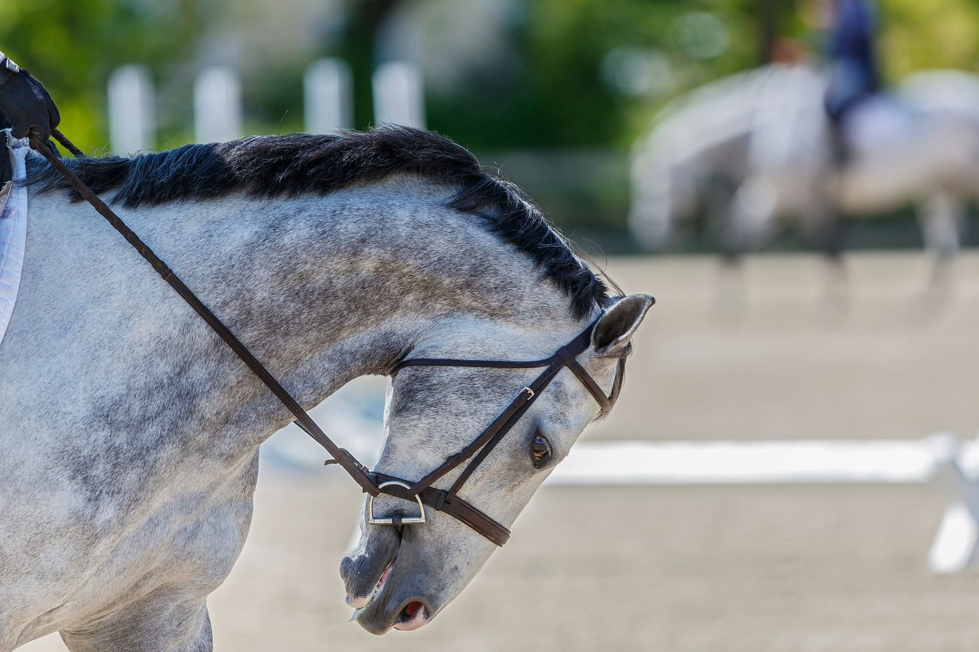 In Chester County, 'Plantation Field' equestrian event is canceled amid debate over its name
