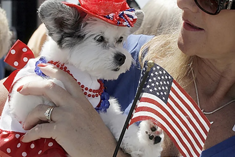This Maltese Papillion dog in Ocean City was dressed up for Memorial Day by its owner, Sue Monahan of Marmora, N.J. (Akira Suwa/Inquirer)