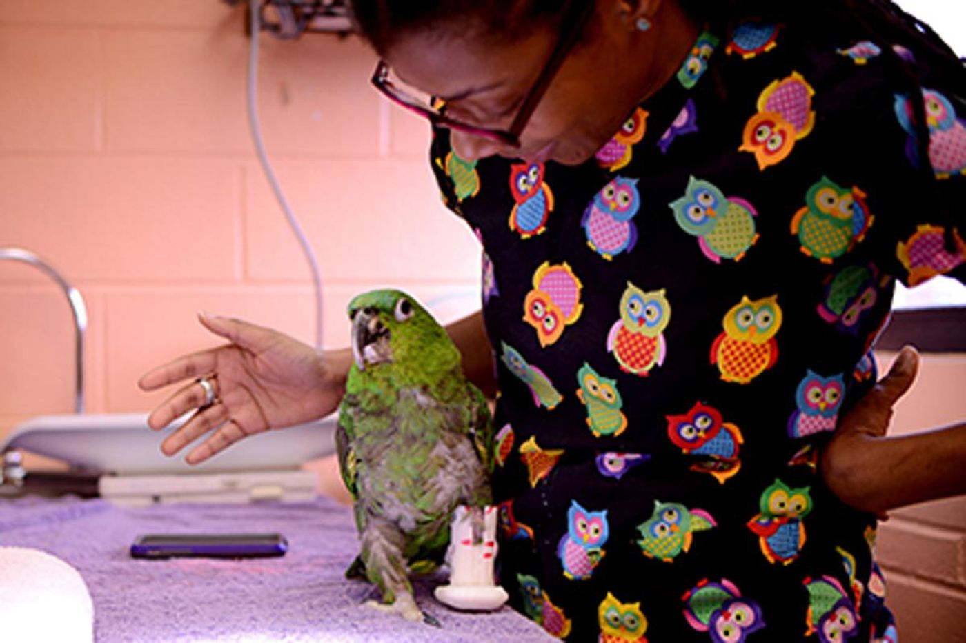 Penn Vet makes a 3-D leg for Pete the parrot