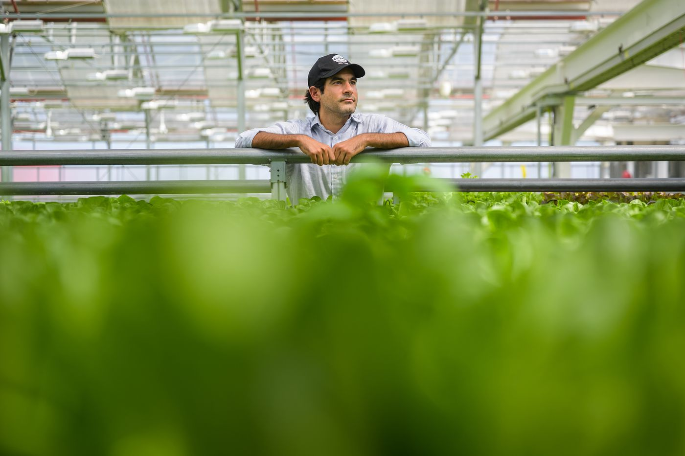Indoor farming is one of the decade's hottest trends, but regulations make success elusive
