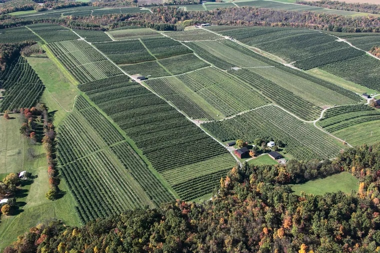 Aerial view of Ridgetop Orchards in Schellsburg, Pa.  A mysterious disease is killing off apple trees in Pennsylvania, and others areas of the eastern United States.