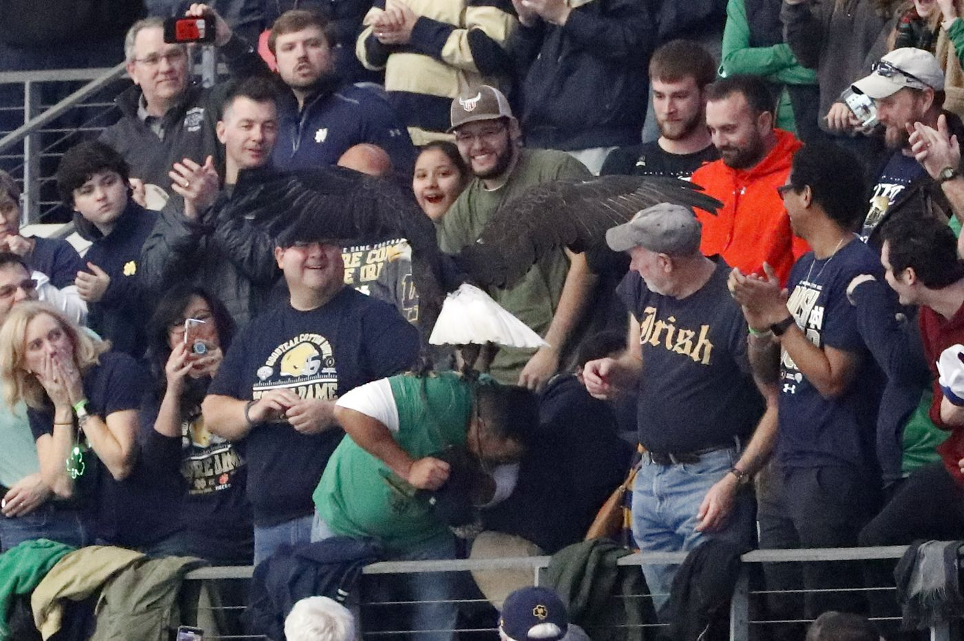 A rogue bald eagle at the Cotton Bowl lands — on a Philadelphia Eagles fan, naturally.