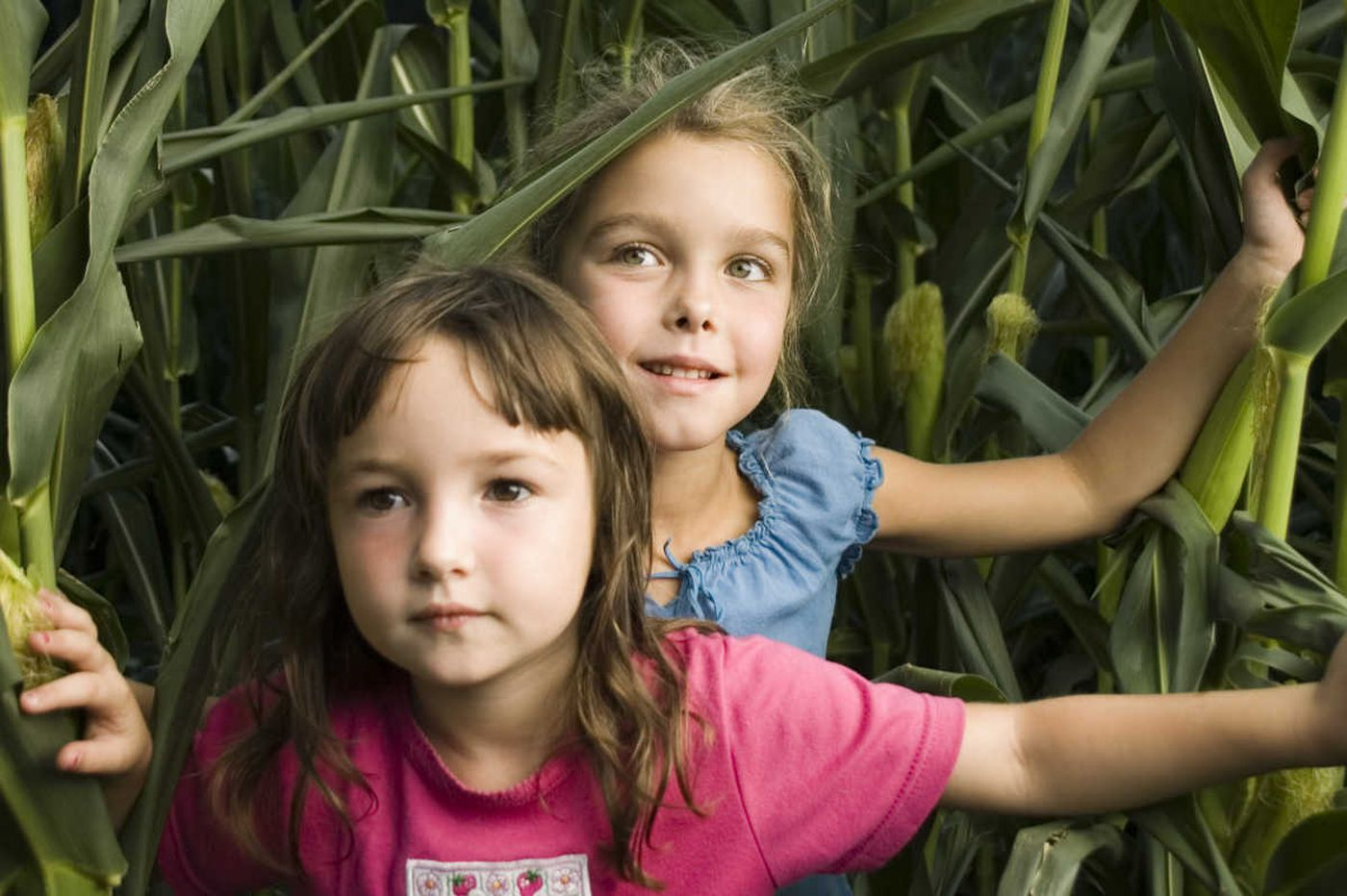 6 Philly-area corn mazes to get lost in