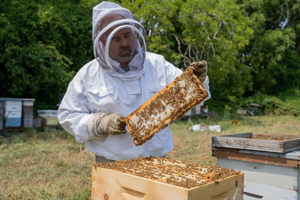 West Cape May honey sweetens summers at the Jersey Shore. It's a family thing.