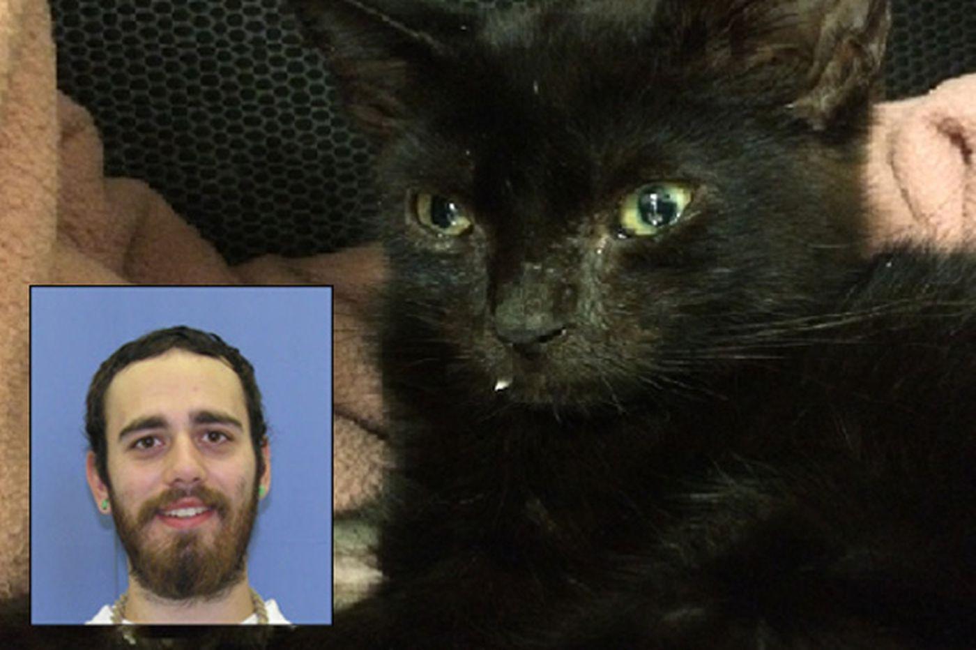 Heroin kitty bounces back; attacker awaits fate