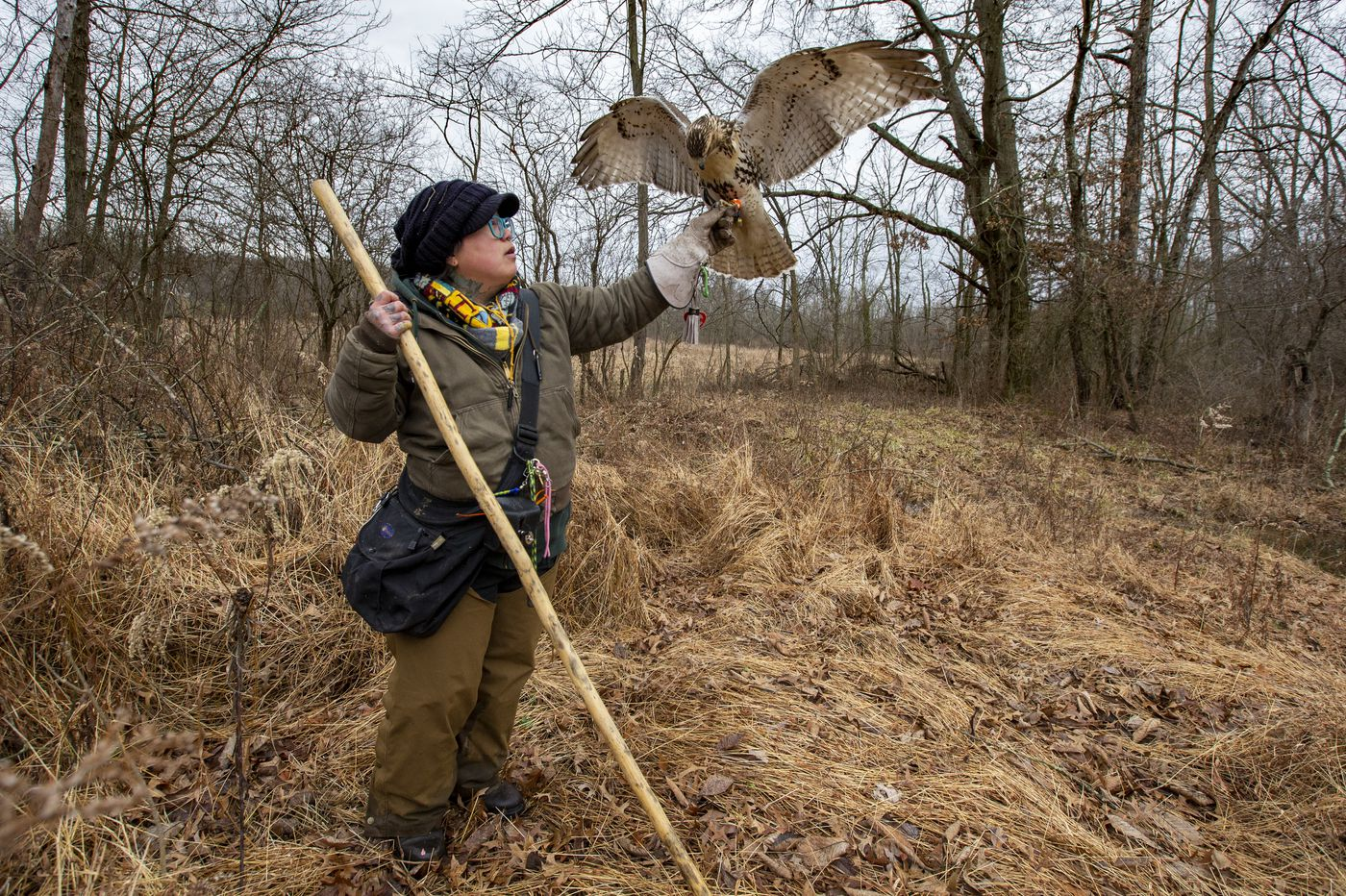 Falconry, an ancient form of hunting, finds new devotees
