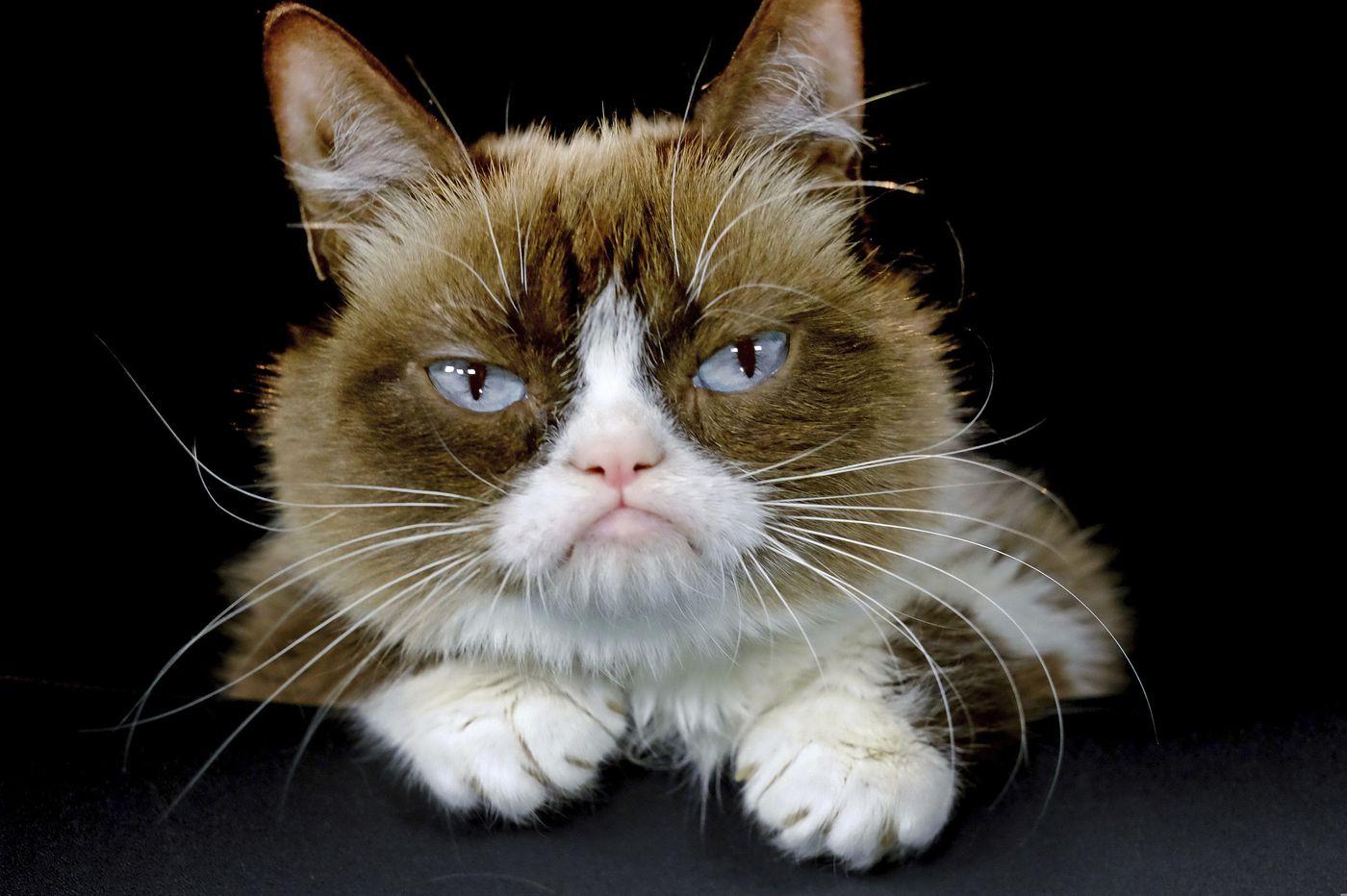 Grumpy Cat, the internet sensation, has died