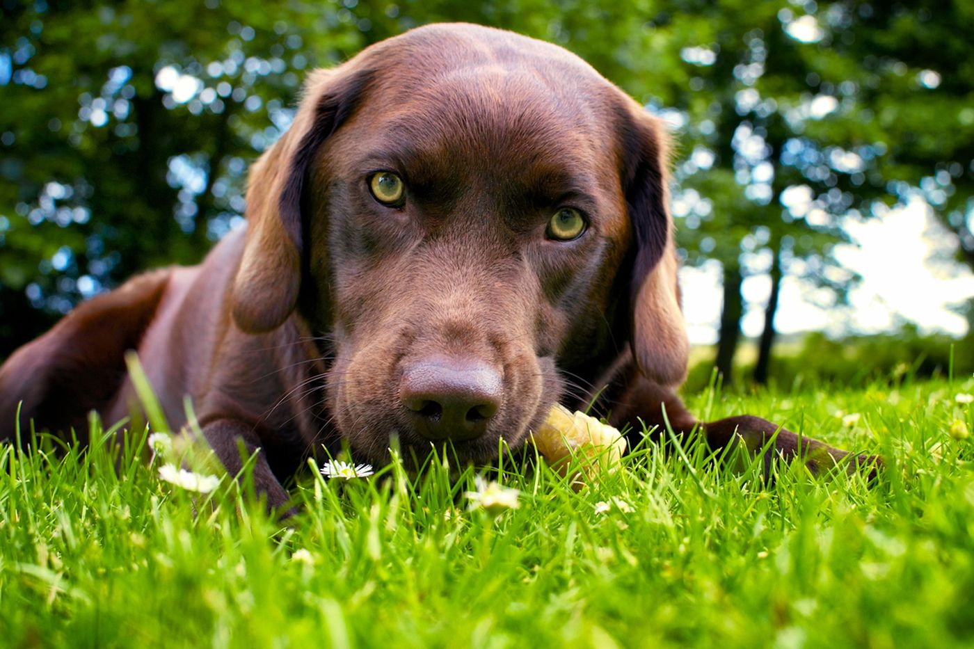 Dogs with Lyme disease may offer early warning for humans