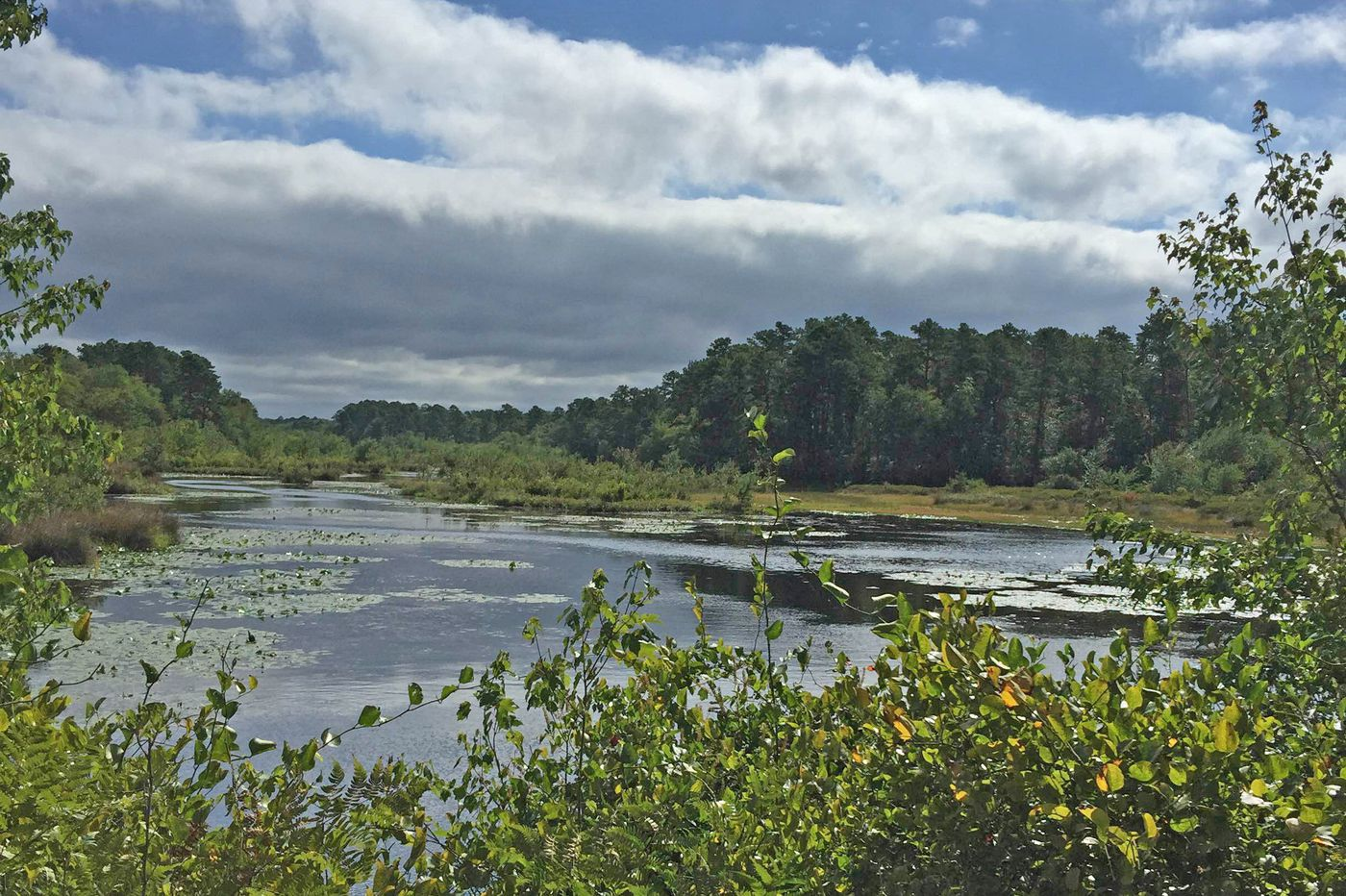 442 acres of N.J. cranberry farm preserved; will open to public but close to ATVs