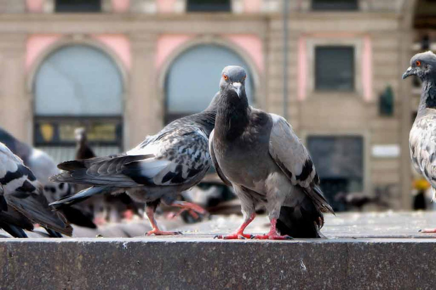 Can pigeons replace radiologists?