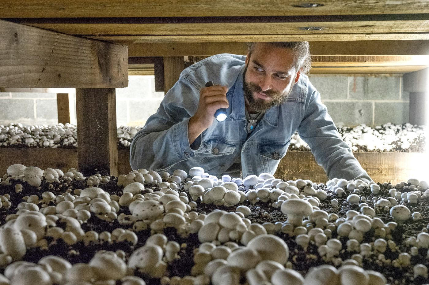 Why The U S Mushroom Business Is Migrating To Canada