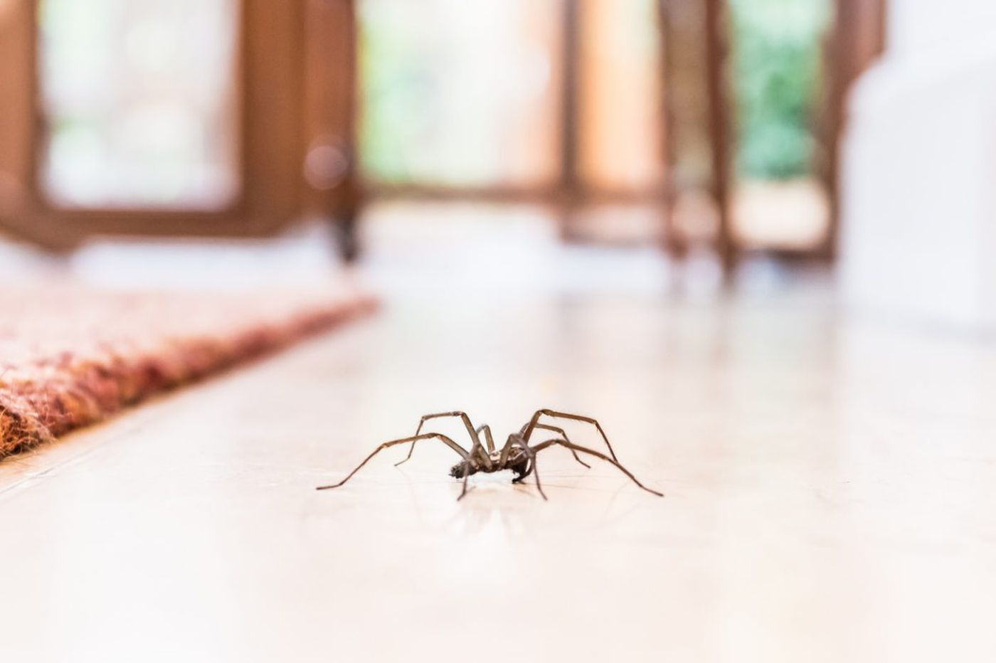 Why you shouldn't kill that spider in your house