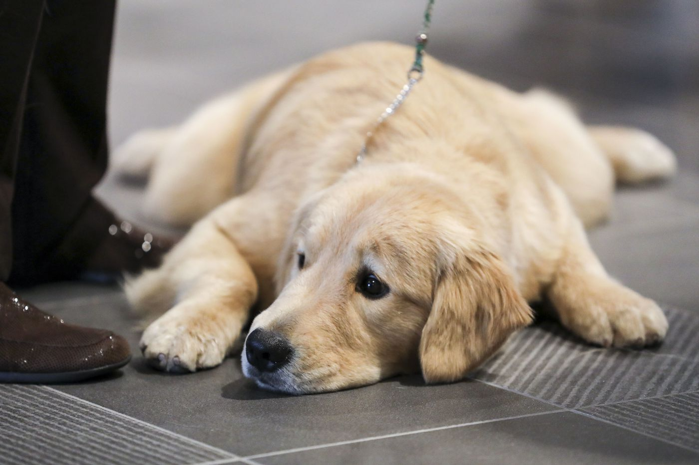 Pet 2,080 dogs at Philadelphia's National Dog Show this weekend