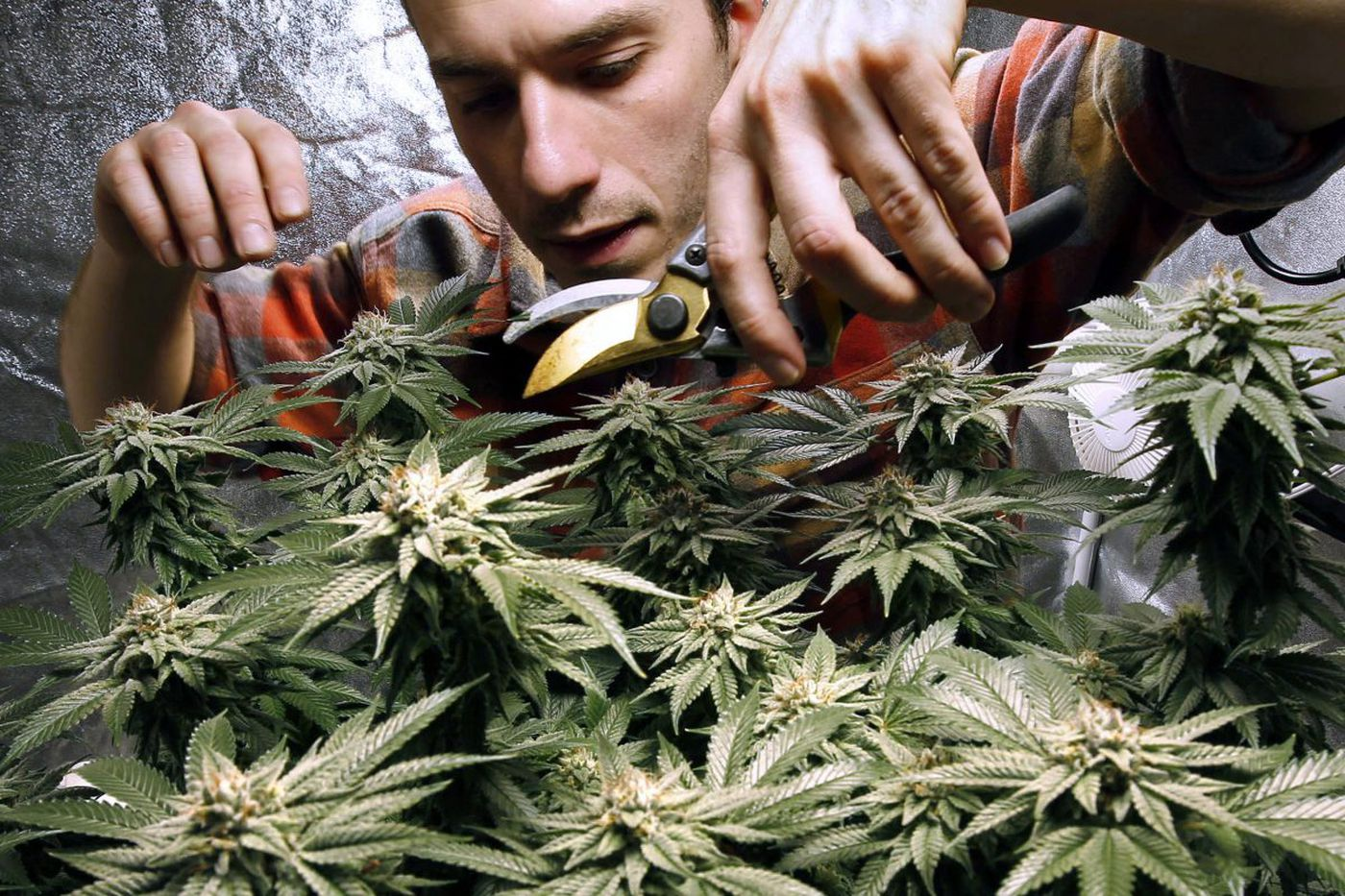 Vermont legalizes marijuana, but doesn't allow for a commercial industry