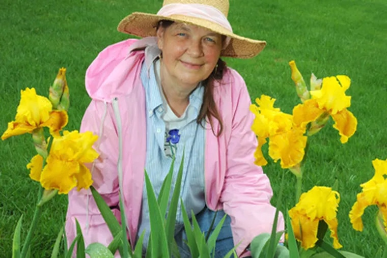 Helen Lewis has to kneel down to keep her River Valley Iris Garden going, with a lot of weeding required. (Clem Murray / Staff Photographer)