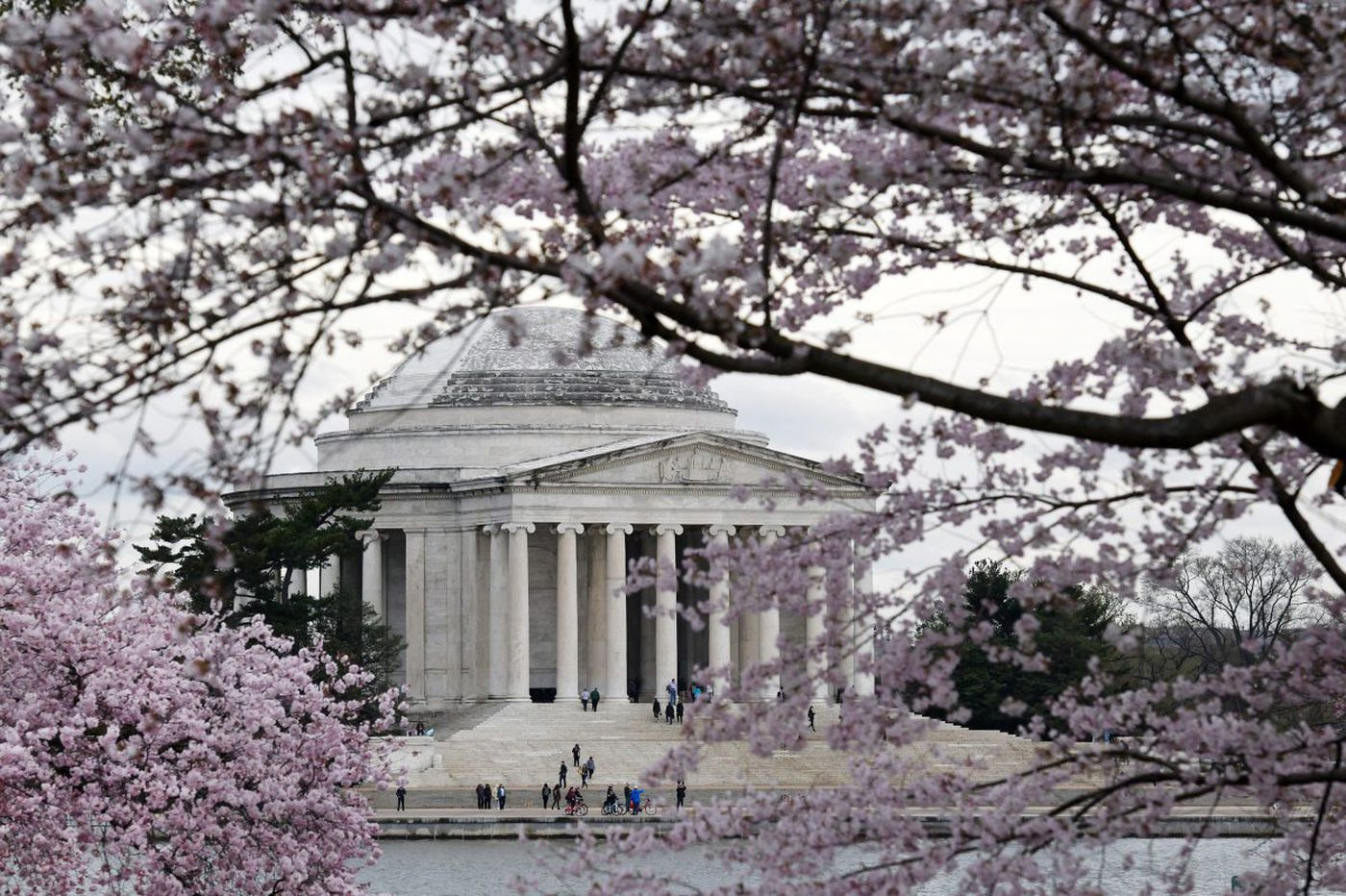 Peak for D.C. cherry blossoms? April 3 to 6