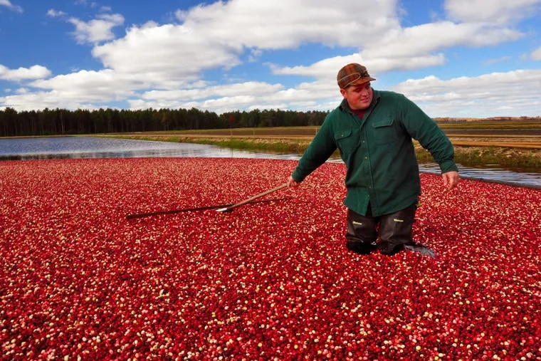 John Moss is the fourth generation to work at his family's Elm Lake Cranberry Co. near Wisconsin Rapids, Wis.