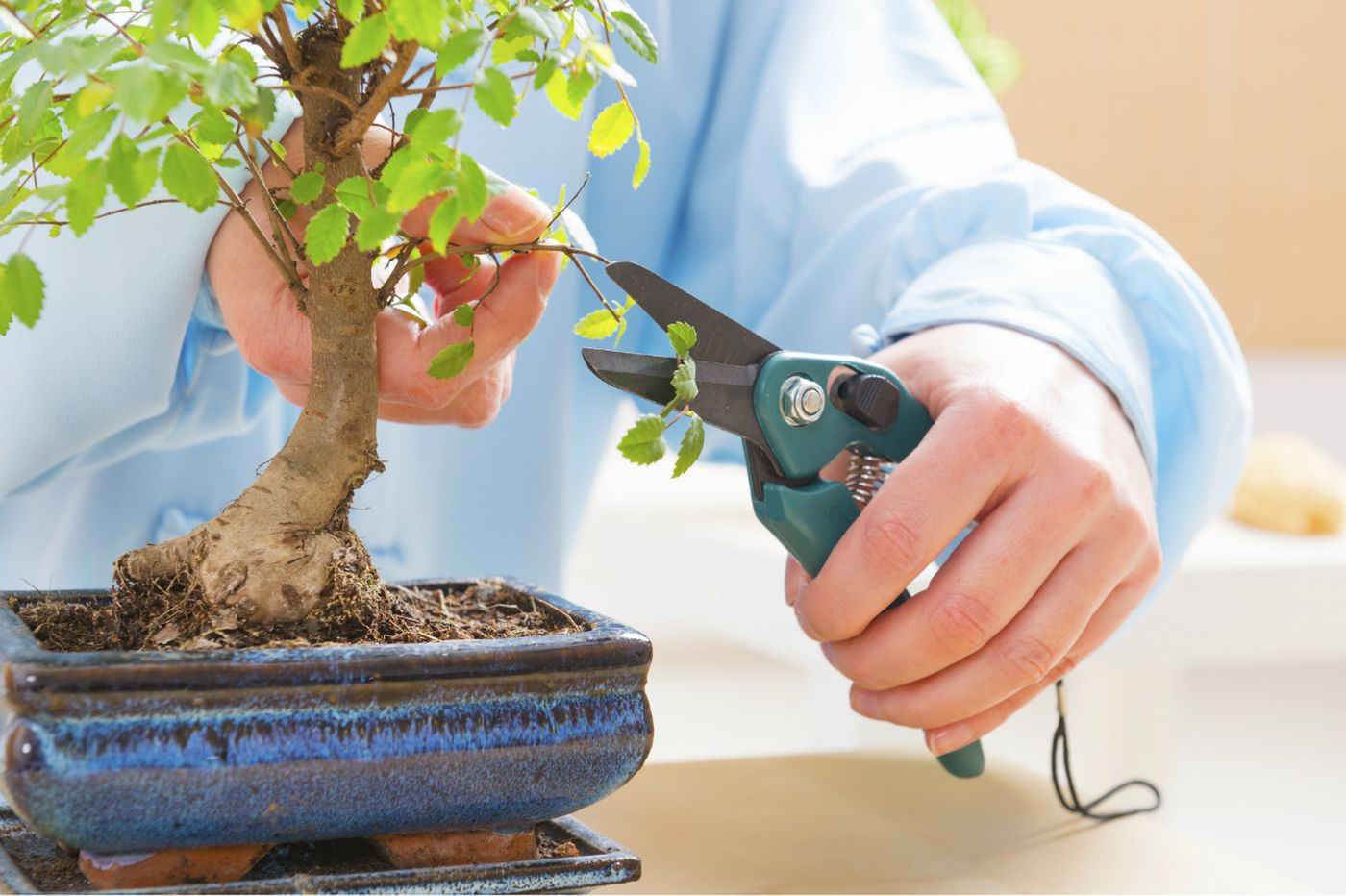 Can you dig it?: 6 ways to get hands-on with plants