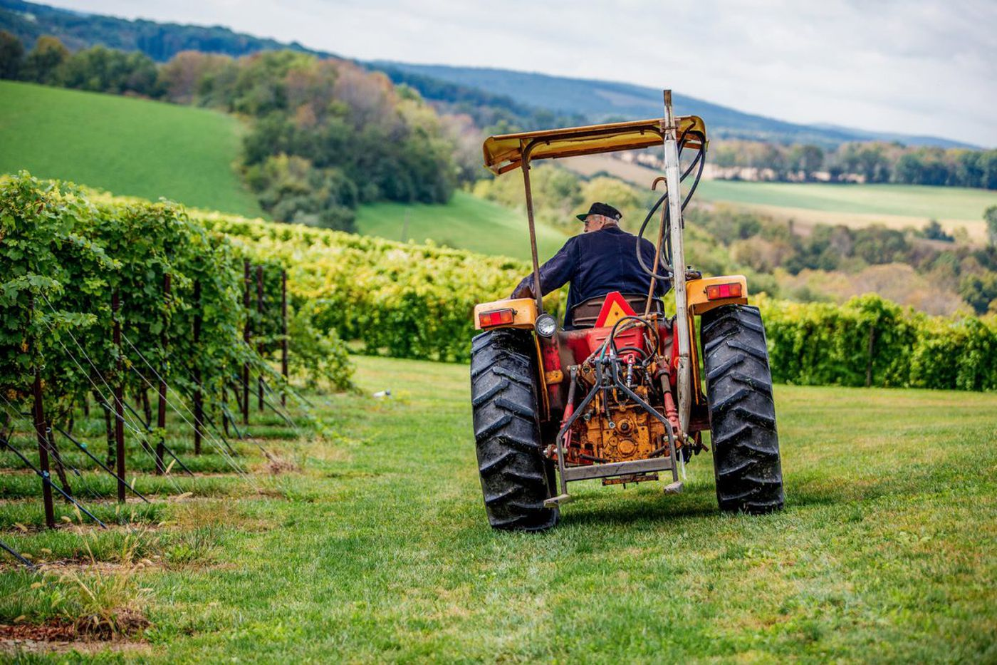 Pennsylvania's cabernet francs are coming into their own
