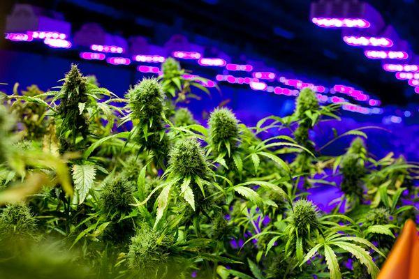 Pa. awards $10.4M contract to track medical marijuana