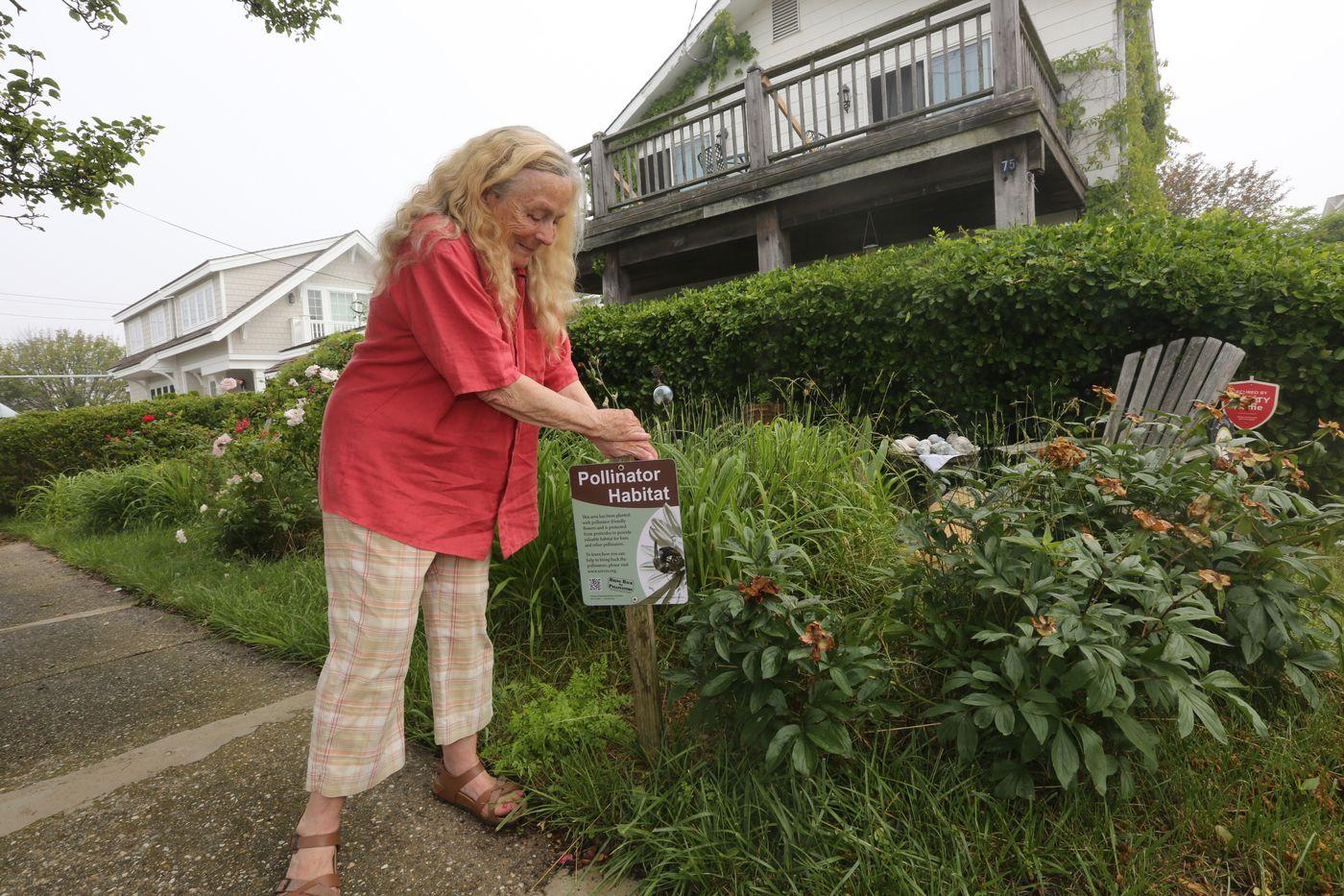 An eyesore or environmental attraction? Jersey Shore