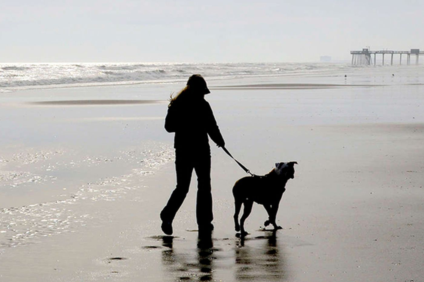 Dogs may get a beach to roam