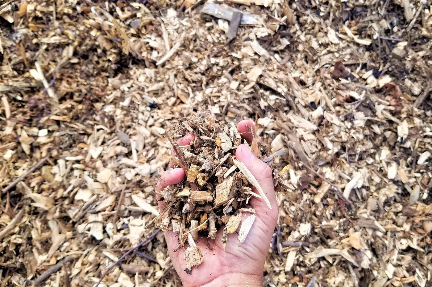 Philly has a big surplus of wood chips and firewood due to COVID-19 and storms. Residents, come and get it.