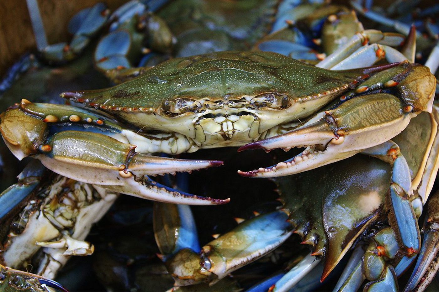 Penn State researchers use crab shells, wood to make eco-friendly packaging