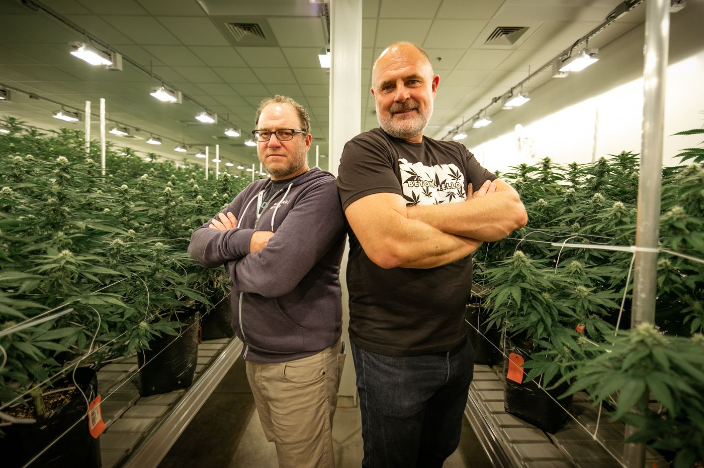 Big Marijuana company Jushi to triple cultivation in Pa. as cannabis sales continue to rise
