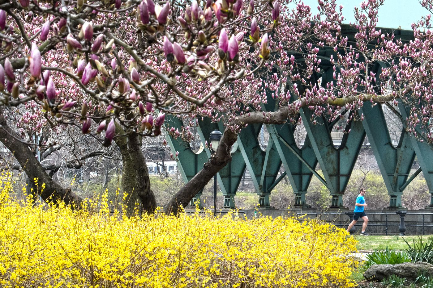 More city trees can help with climate change | Editorial