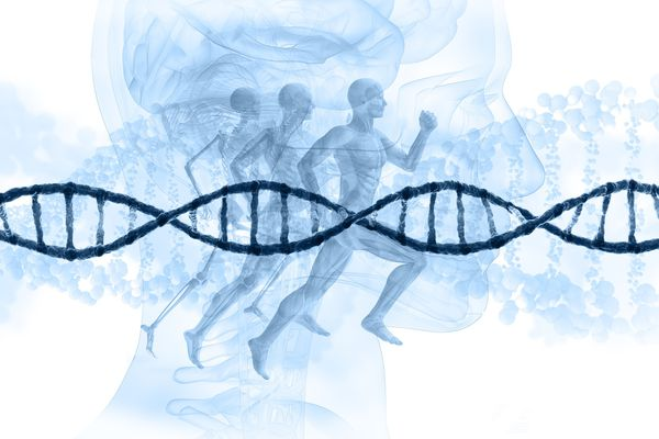 What genetics could mean for your heart disease risk — and what you can do about it
