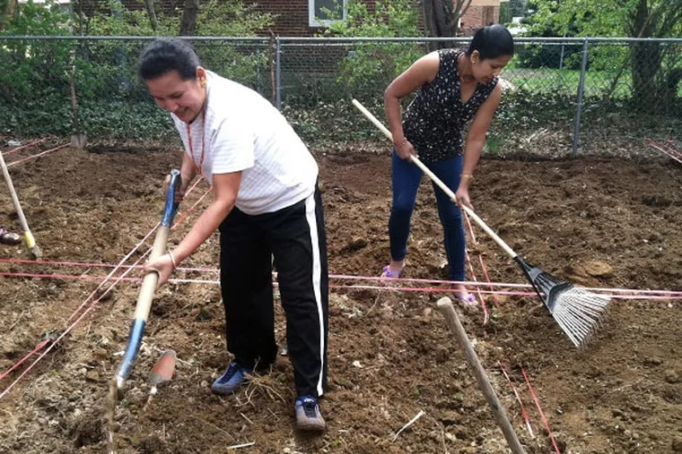 Indra Karki, left, and Meena Dhimal, Bhutanese refugees of Nepali descent, till the soil at a new community garden for Bhutanese refugees on the grounds of the All Saints Episcopal Church at Loney and Frontenac streets in Rhawnhurst on Friday, April 25, 2014. HIAS Pennsylvania, a refugee resettlement agency, helped find this piece of land for the refugees. (Julie Shaw/Staff)