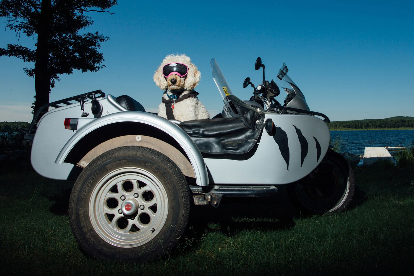 Sidecar dogs: On the road with some easy, furry riders