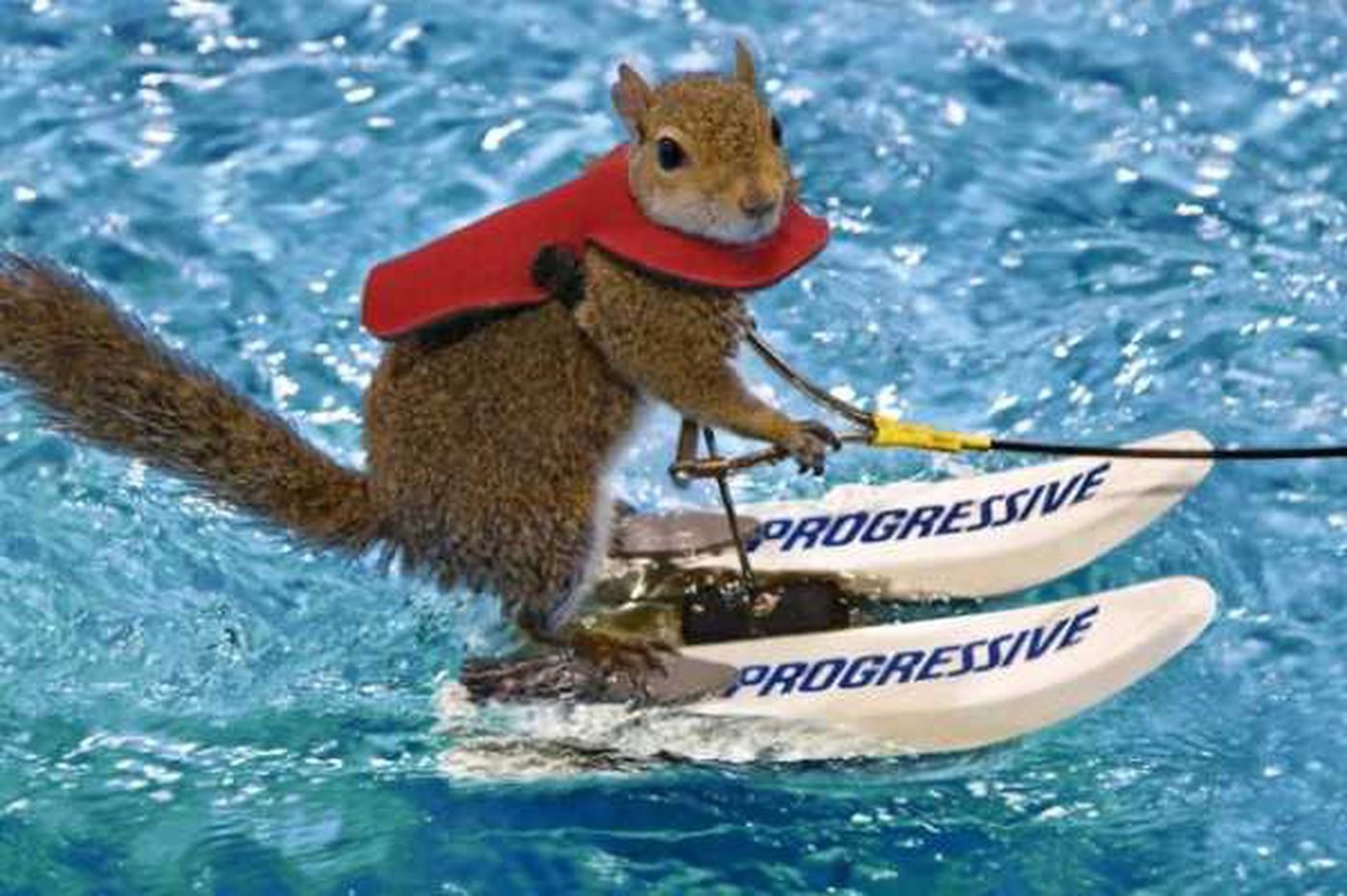 There's a water-skiing squirrel at the Philadelphia Boat Show this weekend