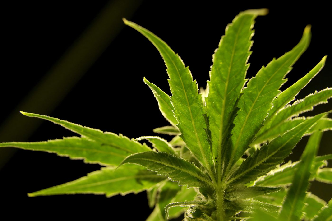 King of Prussia offers more than high fashion: Its 3rd medical marijuana shop opens next week
