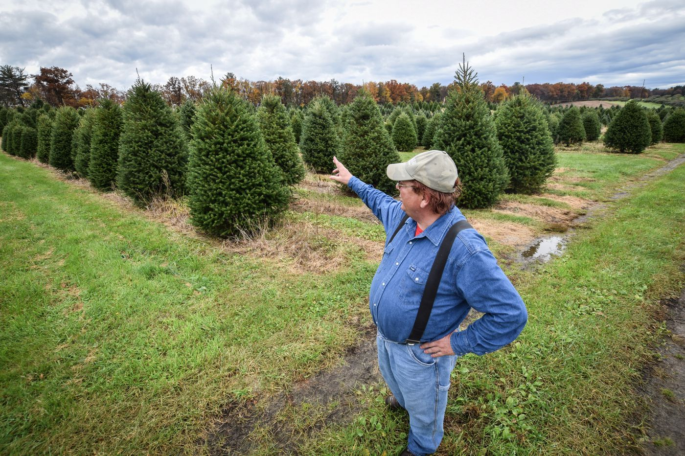 Pennsylvania farmers use sweat, science to craft the perfect Christmas tree