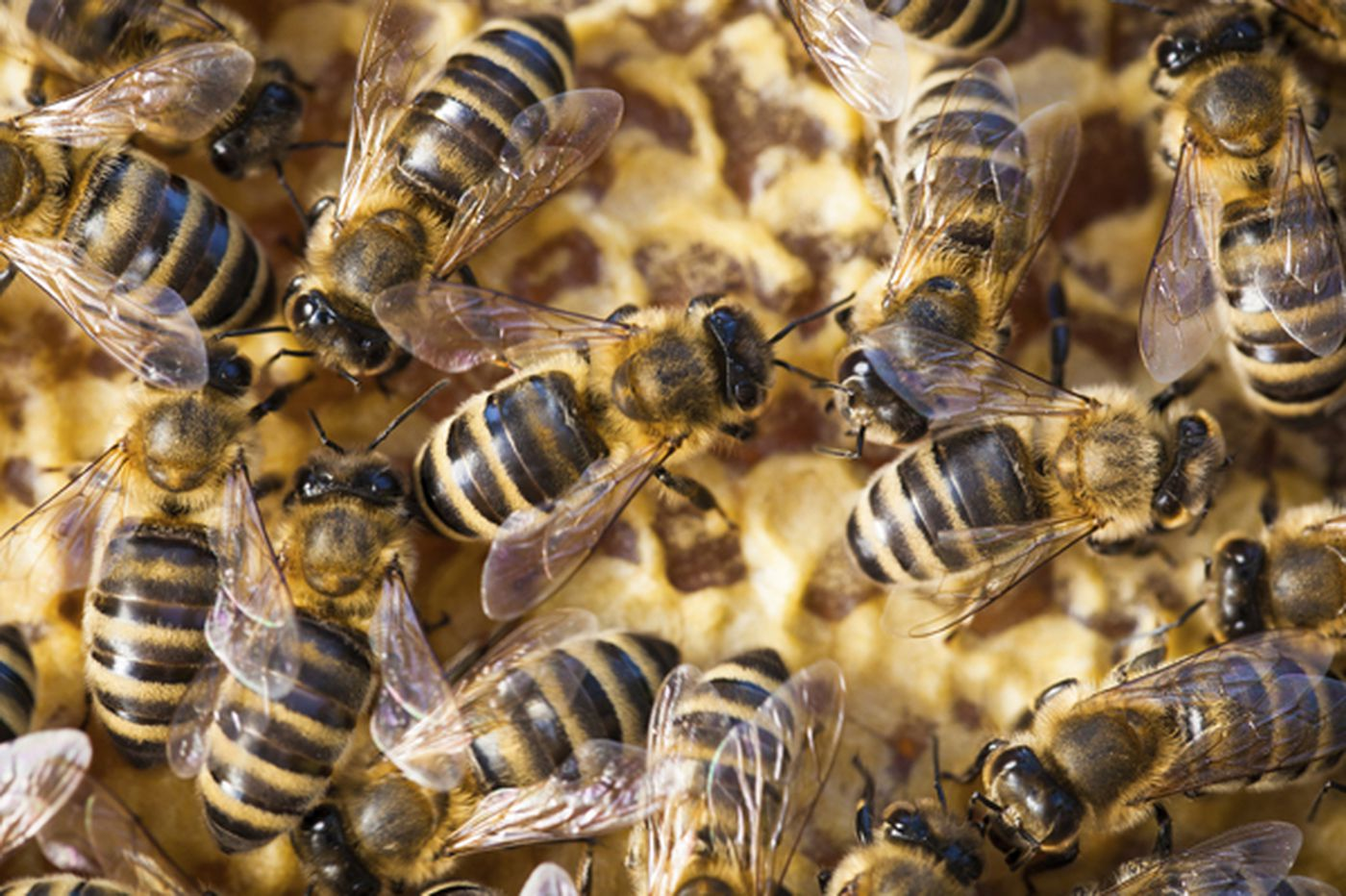 Your Place: Noise may be bees or wasps