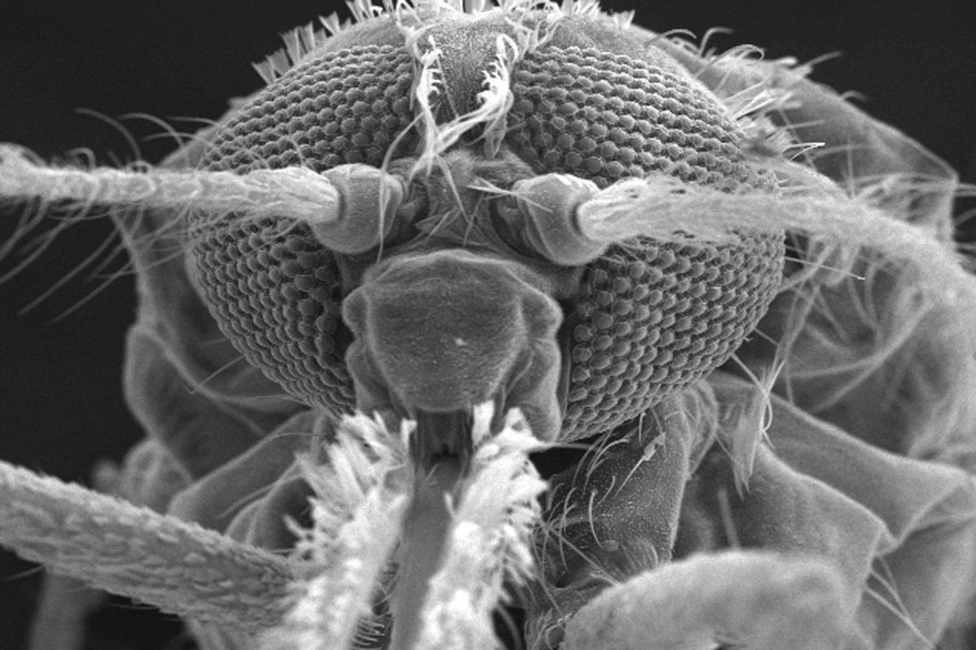 This beast kills at least 500,000 people a year. A Penn scientist is trying to stop it
