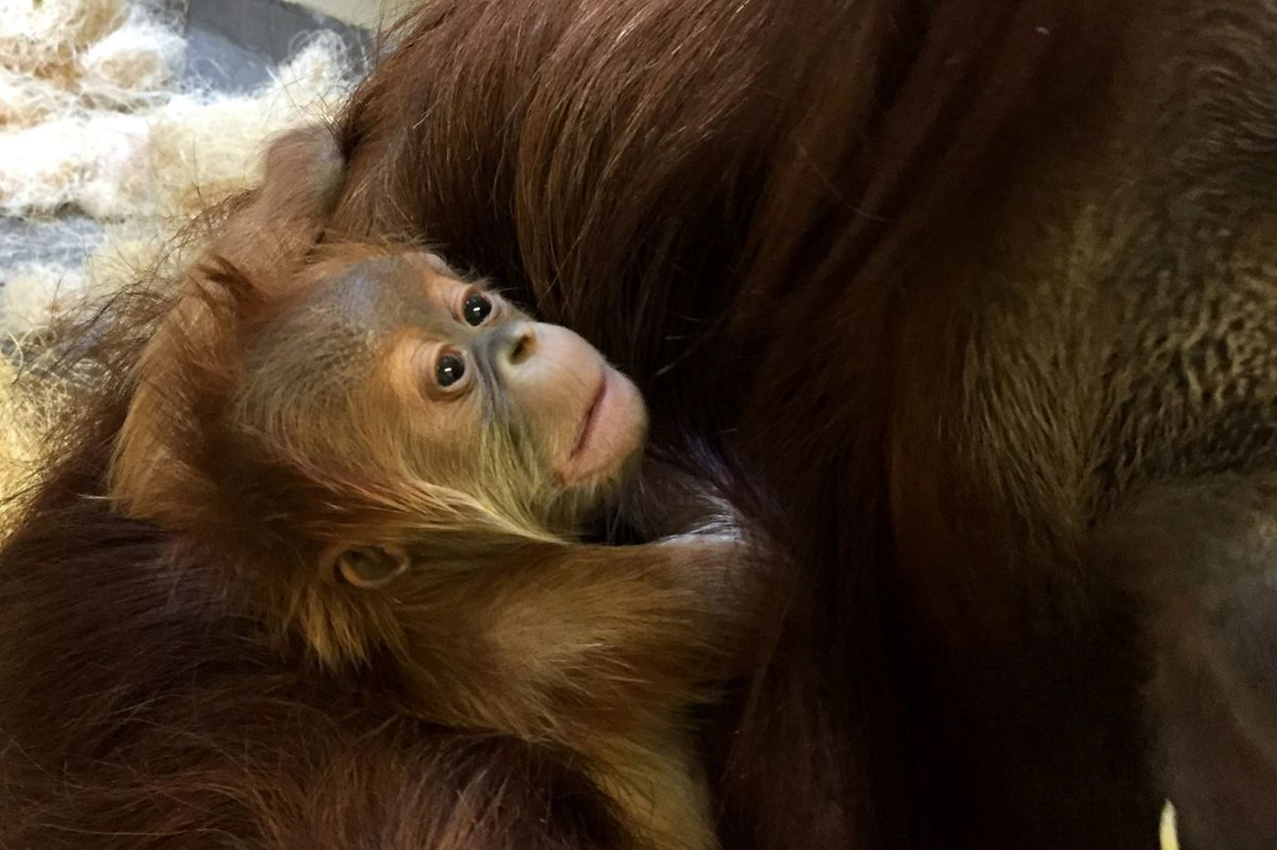 At parks and zoos, our picks of the litters
