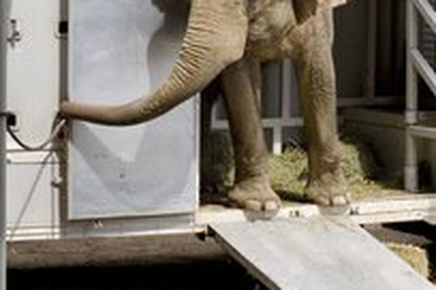 Elephant reaches Tennessee