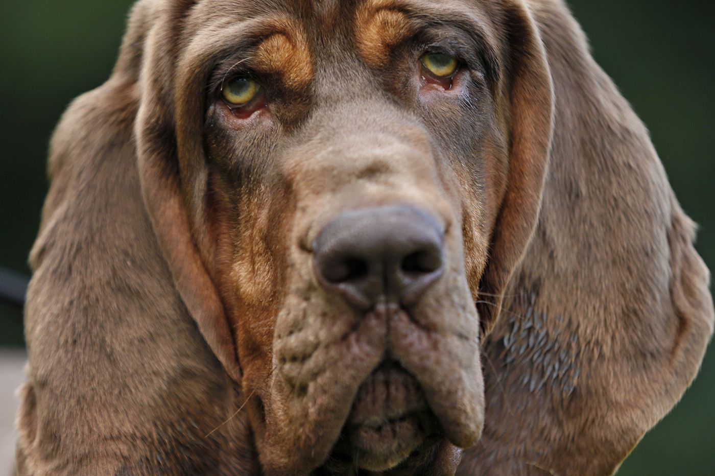 This Haddonfield police bloodhound found a missing child in just 15 minutes