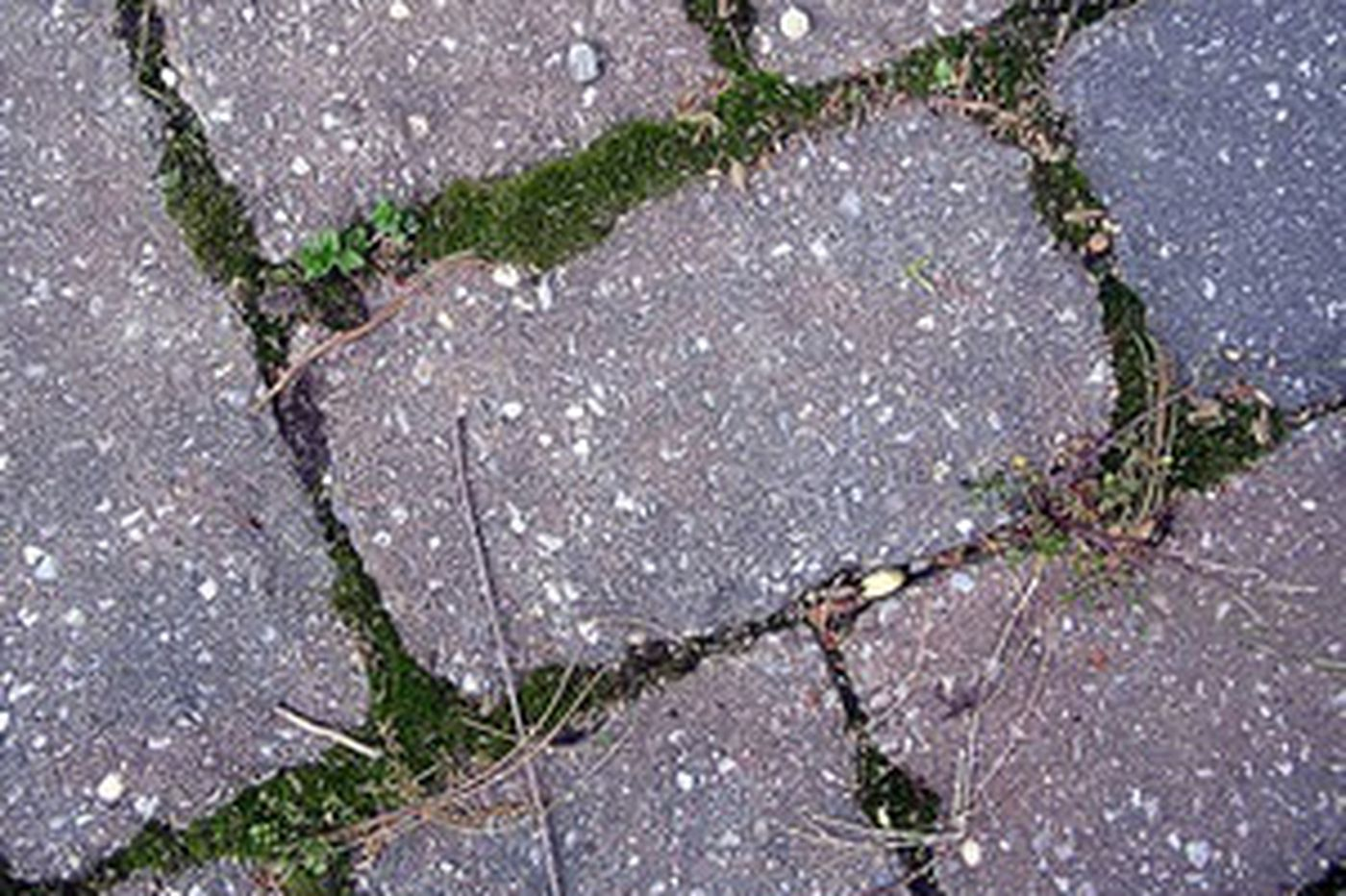 Your Place | A power-washed walkway will likely gather no moss