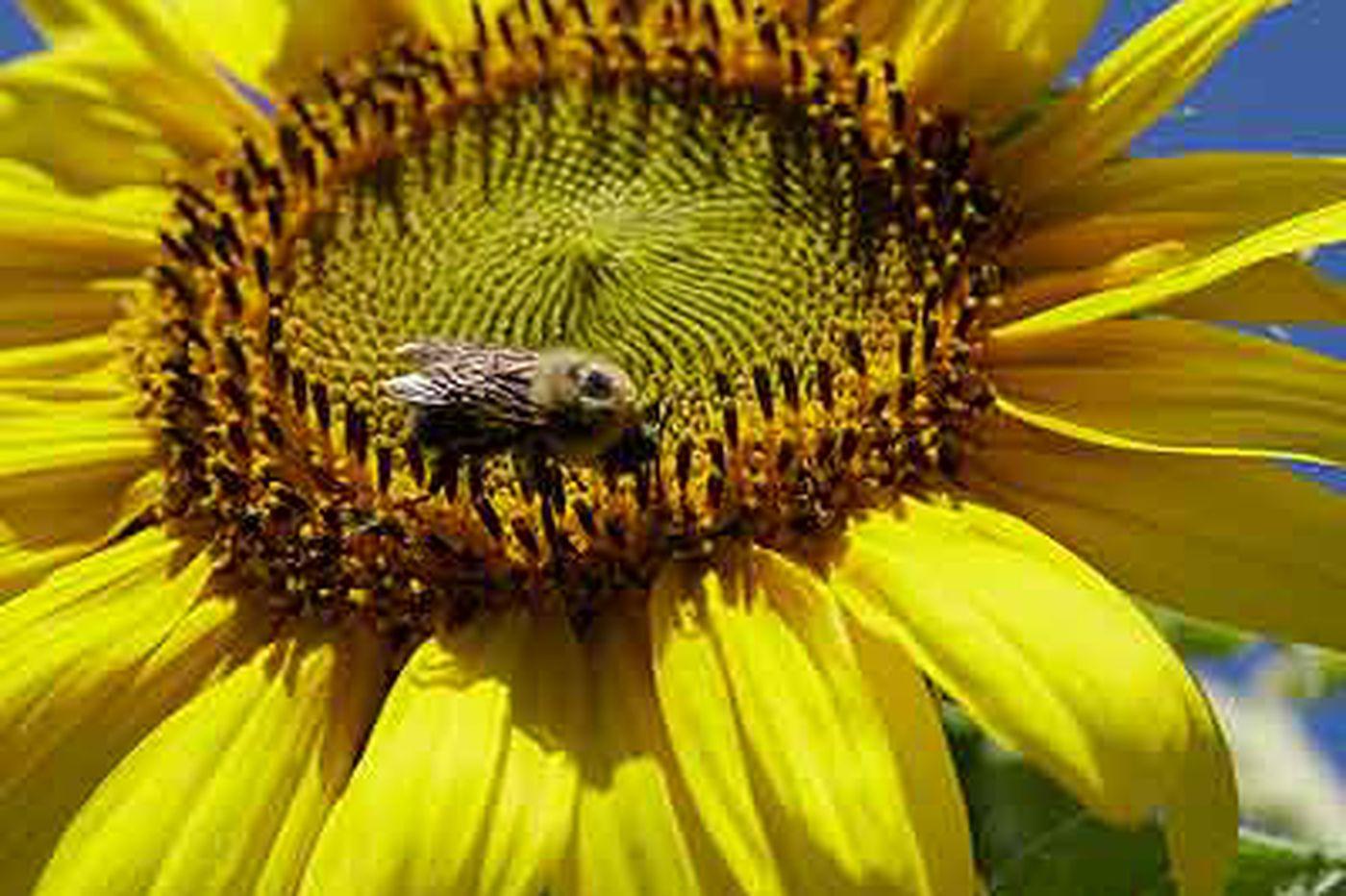 Pollen arriving ahead of schedule