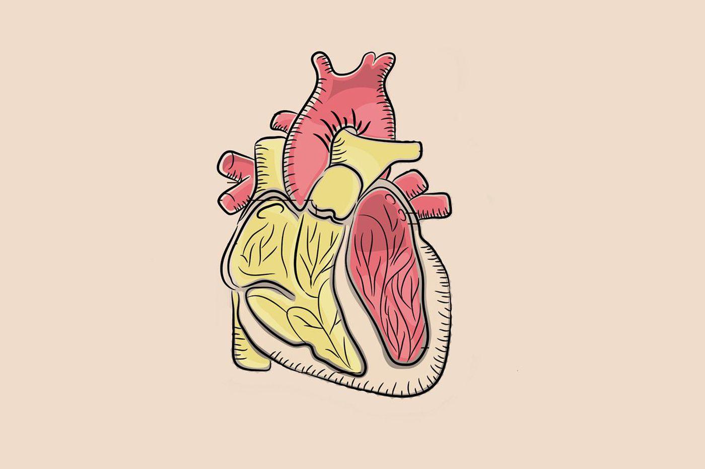 Temple scientist wins $1 million award to study how heart 'talks' to fat