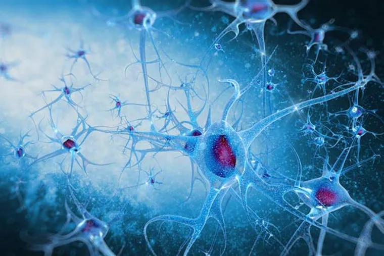 Researchers have discovered a defect in a key cell-signaling pathway they say contributes to both overproduction of toxic protein in the brains of Alzheimer's disease patients as well as loss of communication between neurons.